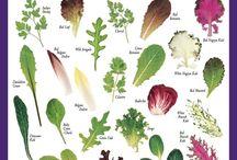 Veggies/Gardening