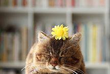 Cat / 猫の画像、デザイン