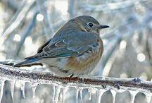 Animals, birds, etc. / by Cheryl Ballieu