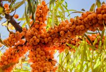 ovoce, zelenina-návody