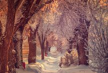 Naturbilder vinter