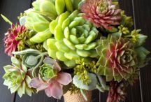 Succulent bouquet / 多肉植物のブーケ
