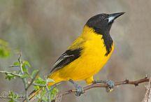 Birds - Texas