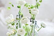 Blumen | Flowers