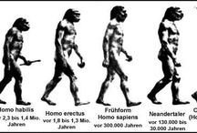 El Ser Humano - Homo Sapiens