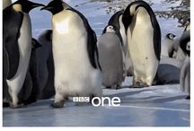 BBC / The wonderful beautiful (murderess) BBC!!!