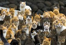Cat Island -Aoshima / Aoshima Island is in the Ehime prefecture in southern Japan. An army of cats rules the remote island in southern Japan, curling up in abandoned houses or strutting about in a fishing village that is overrun with felines outnumbering humans six to one. | www.petnook.in #PetNook
