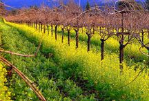 Around California Wine Country. My Other Home!