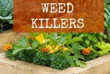 bitki hastalık tedavi