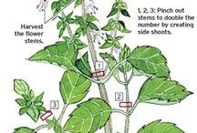 plant specific care