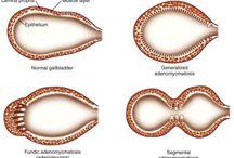 Žlučové cesty a žlučník / Gallbladder and bile ducts