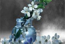 Fotografie color