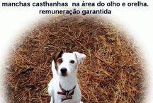 Help...have you seen... / by Xana Abreu