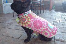 French Bulldog Wardrobe