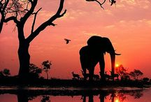 animals / Szeretném megcsodálni és megmutatni menyi csodálatos állat van a földön.