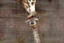 Animals / Keep calm and love animals