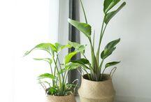 식물인테리어