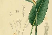 catalogue plantes
