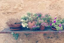 Provence and Provencal
