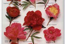 Flora & Fauna / by Morgan Cates