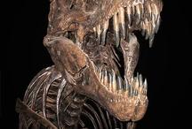 Fossils