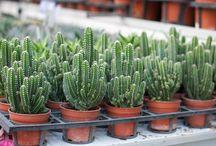 Cacti and pals