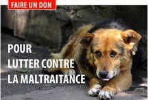 stop à la cruauté humaine envers animaux