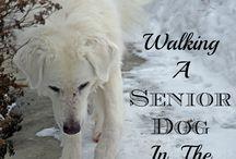 Keeping Senior Pets Active