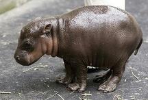 Hip! Hip!! HIPPOOOO !!!