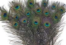 Peacock Feather Centerpieces and More