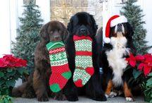 Christmassy Dogs :)