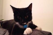 Jenson cat / My pet