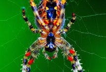 Spiders and Insects / by Roelina Greeff