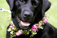 DOGS CAN WEAR FLOWERS TOO
