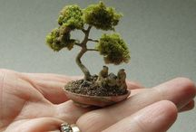 Bonsai Tree's