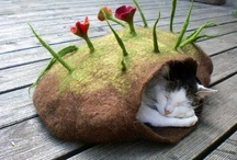 Feline Frenzy... & other Grrrr-animals