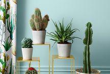 INTERIORS: cacti