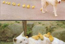 Fluffy / animals