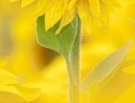 love yellow.
