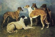 LEVRIERI RESCUE. http://www.elrayoverdegalgorescue.it/ se amate i levrieri aiutateci a combattere l'orrore in Spagna.  leggete cosa fanno a questi animali. sosteniamo El rayo verde
