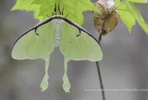 Butterfly / Films on butterfly of Eastern North America. Join Films Nature web TV on Youtube to see web series on wildlife.