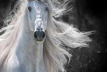Horses - масть серая