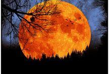 Adore Orange / by Marina Berryman