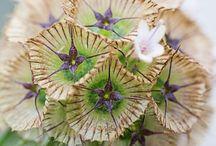 Beautiful photographs *flowers* / http://annualflowers.wordpress.com/