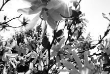 My black and white photography / My name's Ani. I live in Budapest. My hobby is photography.