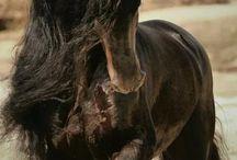 SUPER HORSES