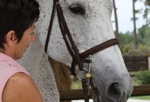 Animal Natural Healing