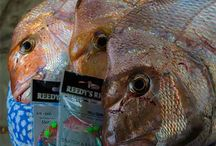 Fishing Report's From  South Australia Adelaide Metro & Country / Fishing Report S.a Metro in South Australia Each week Reedy's Rigz Port a fresh fishing report for south Australia . Find out were the fish are biting in your Local area . Each report contains what's baiting where / & best baits