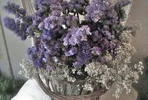 Lavender n Purple / by Nancy McCoy