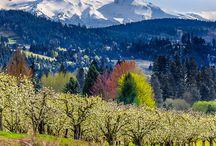 Oregon State / by Vicki Singleton